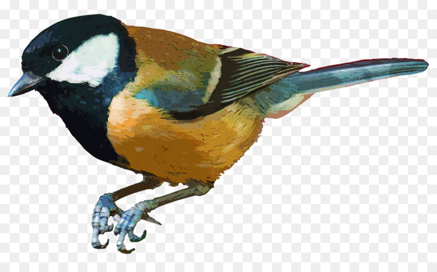 Descarga gratuita de Pájaro, Gorrión, Parrot imágenes PNG