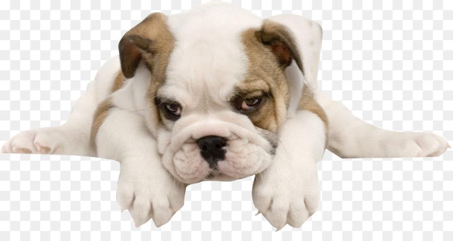 Descarga gratuita de Bulldog, Bulldog Francés, Toy Bulldog imágenes PNG