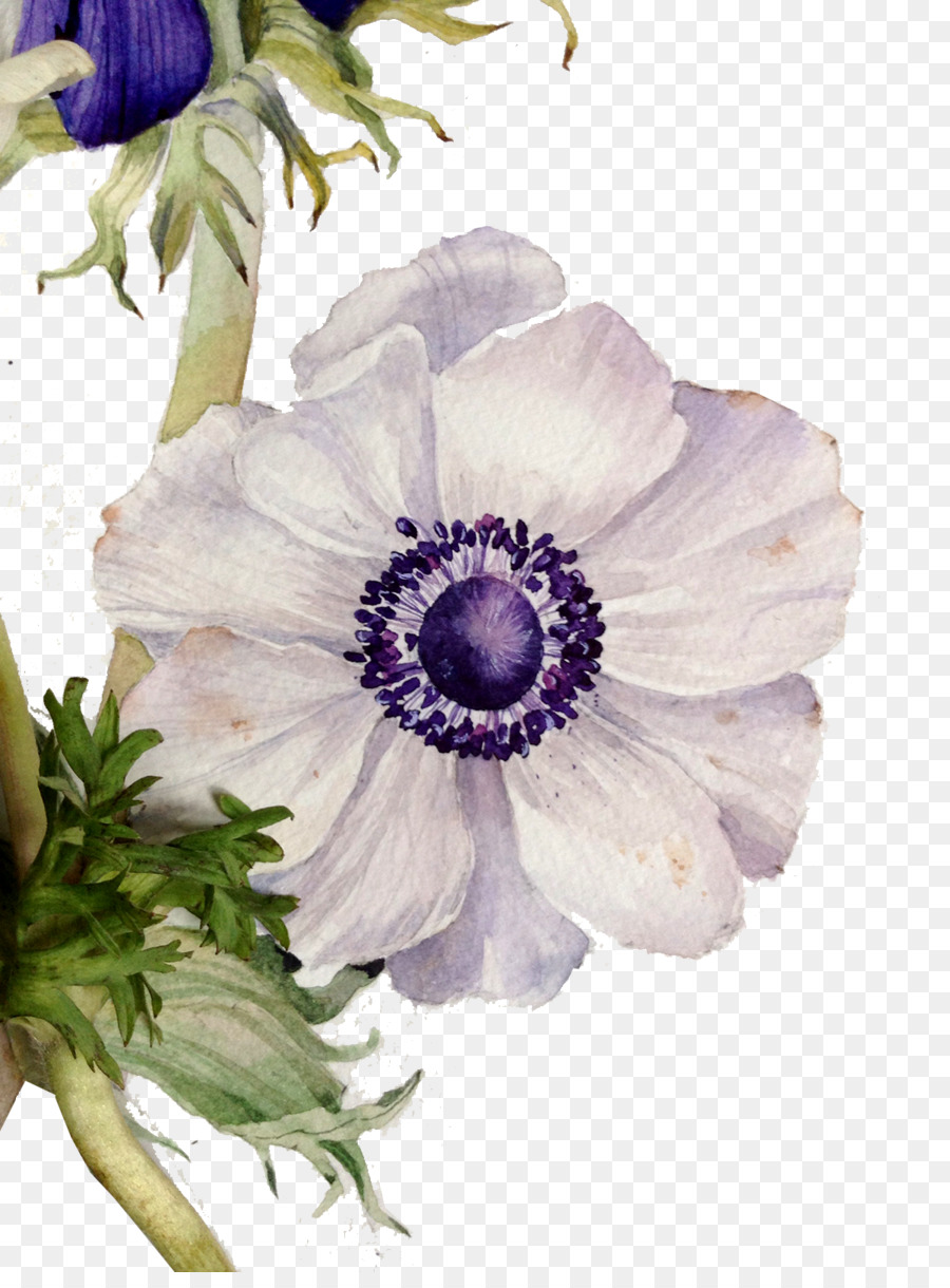 Descarga gratuita de Diseño Floral, Flor, Pintura imágenes PNG