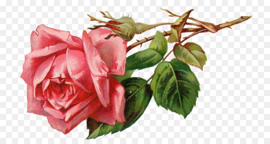 Descarga gratuita de Rosa, Flor, Libre De Contenido Imágen de Png
