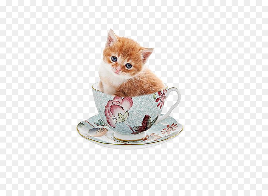 Descarga gratuita de Gatito, Gato, Pink Cat Imágen de Png