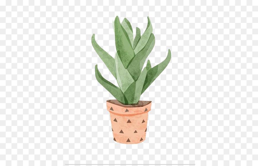 Descarga gratuita de Aloe Vera, Pintura A La Acuarela, Cactaceae Imágen de Png