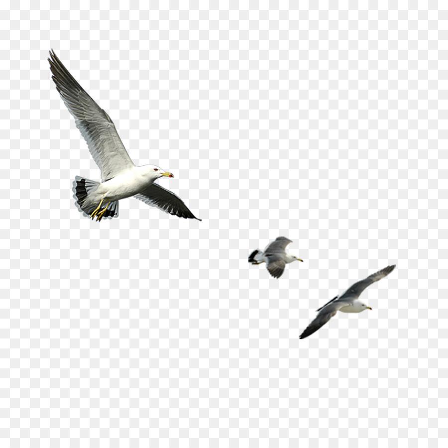 Descarga gratuita de Pájaro, Ganso, Descargar Imágen de Png
