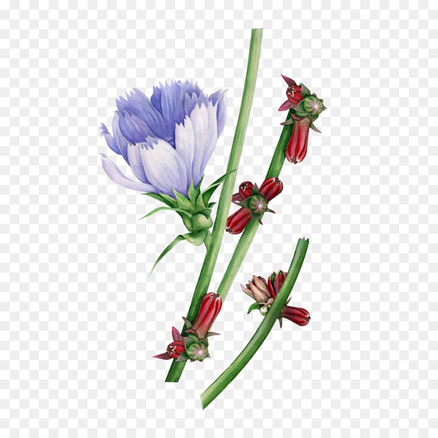 Descarga gratuita de Acuarela De Flores, Pintura A La Acuarela, Diseño Floral imágenes PNG