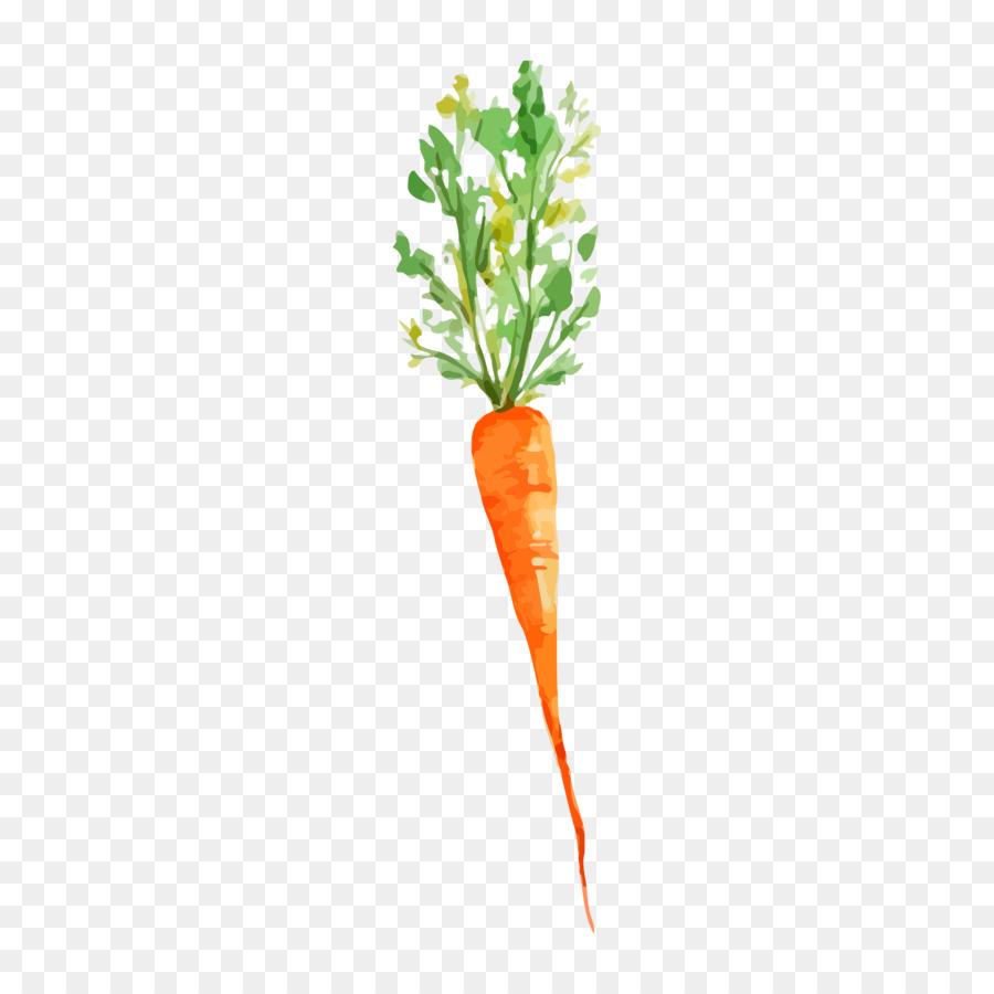 Vegetal Pintura A La Acuarela Zanahoria Imagen Png Imagen Transparente Descarga Gratuita Subespecie sativus, la zanahoria, pertenece a la familia de las umbelíferas, también denominadas apiáceas. vegetal pintura a la acuarela