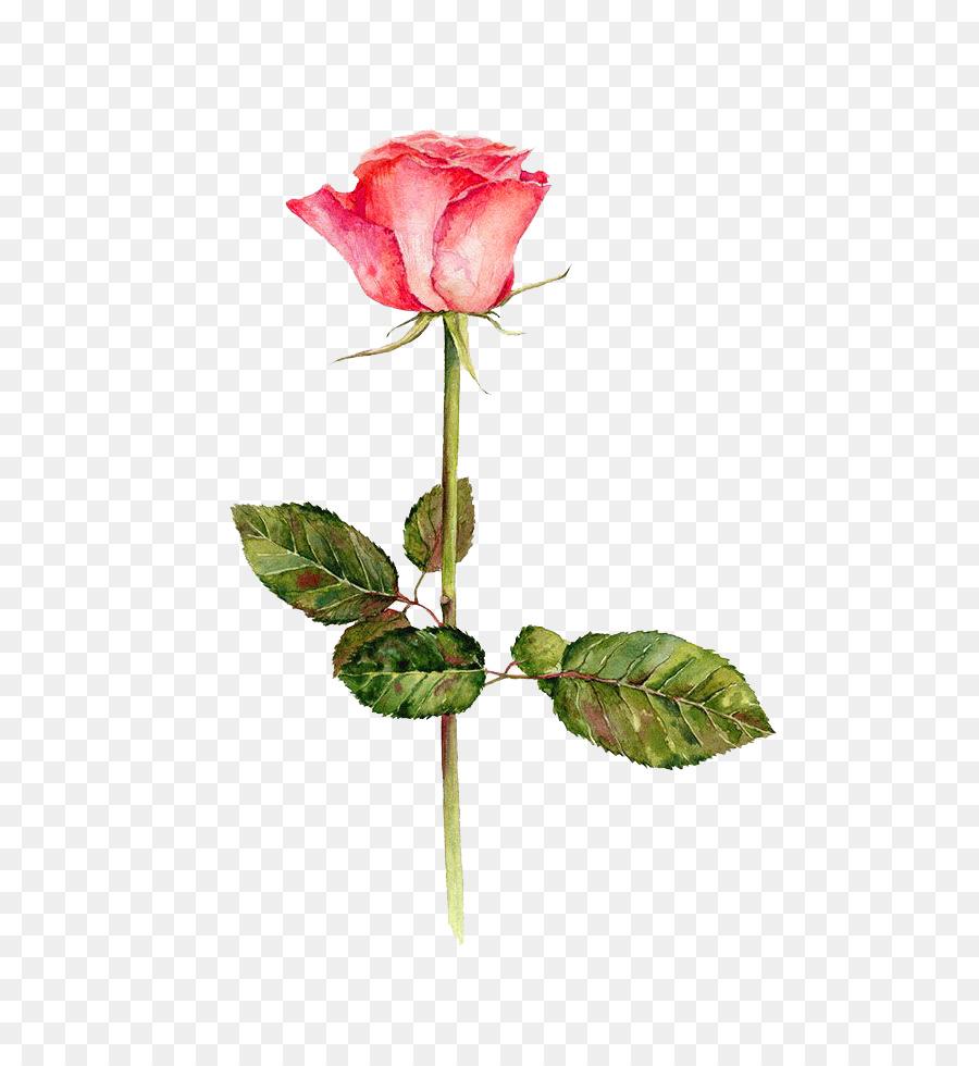 Descarga gratuita de Festival De Las Flores, Acuarela De Flores, Las Rosas De Jardín imágenes PNG