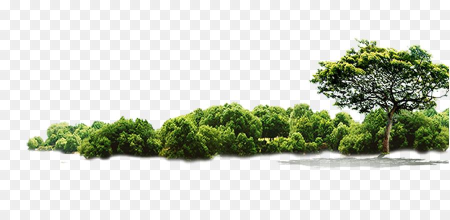 Descarga gratuita de árbol, De La Selva, Descargar imágenes PNG