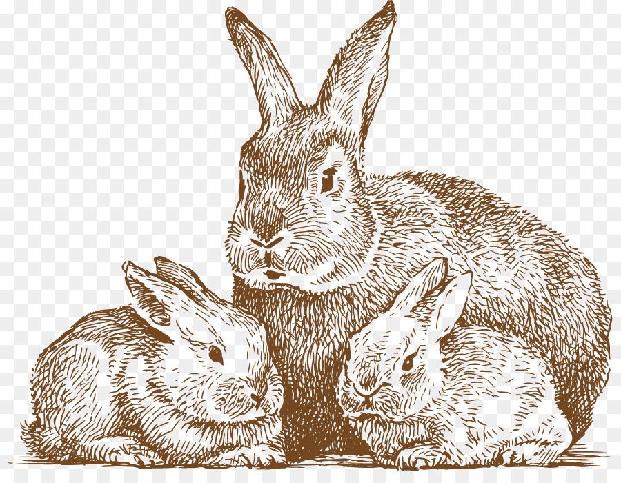 Descarga gratuita de Conejo, Dibujo, Arte De Línea Imágen de Png
