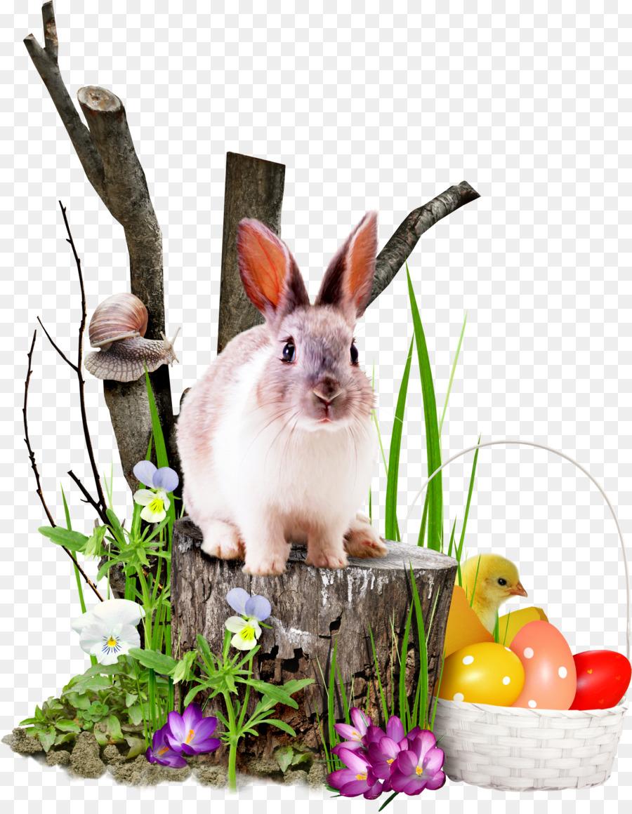 Descarga gratuita de Conejo, Pascua , La Televisión De Alta Definición imágenes PNG