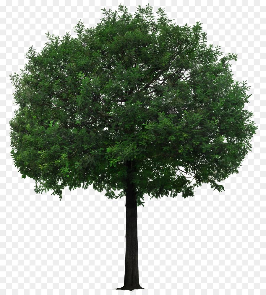 Descarga gratuita de árbol, Ecologización, Descargar imágenes PNG