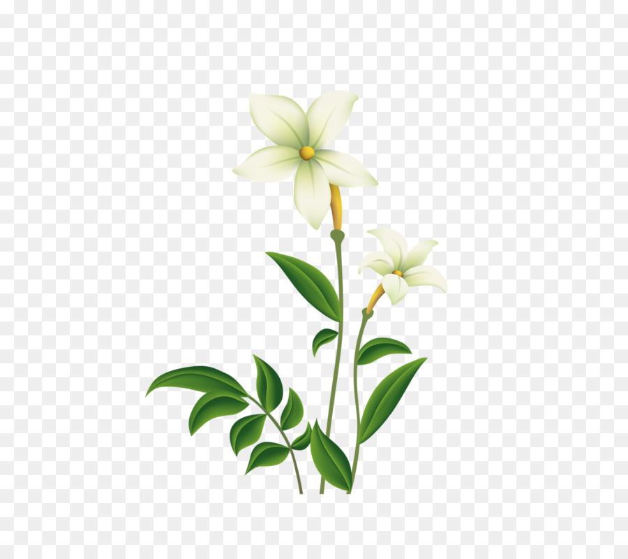 Descarga gratuita de Lilium, Flor, Euclídea Del Vector imágenes PNG