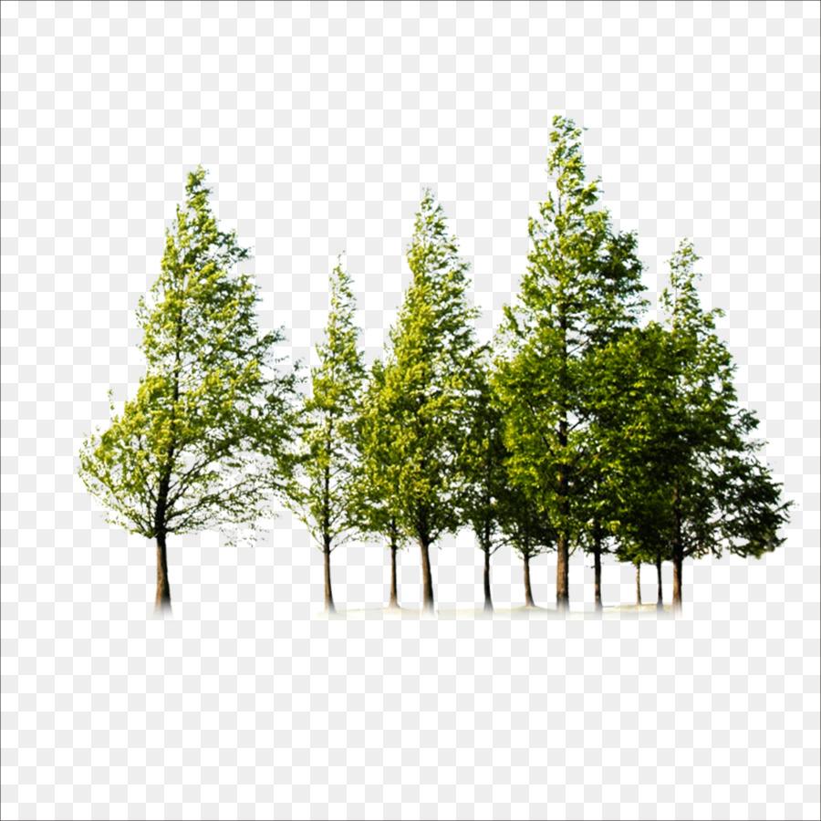 Descarga gratuita de árbol, Postscript Encapsulado, Descargar imágenes PNG