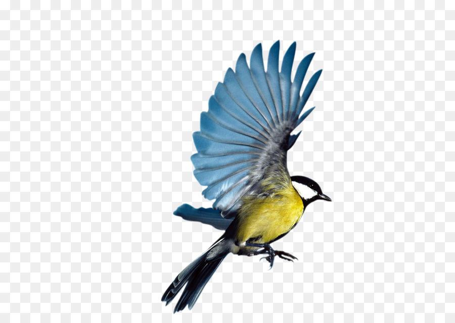 Descarga gratuita de Pájaro, Eurasia Urraca, Vuelo Imágen de Png