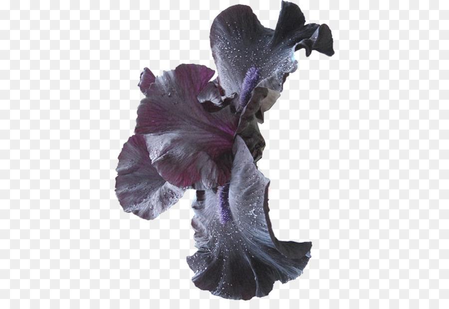 Descarga gratuita de Flor, Lilium, Postscript Encapsulado imágenes PNG