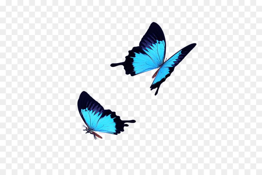 Descarga gratuita de Mariposa, Ico, Azul imágenes PNG