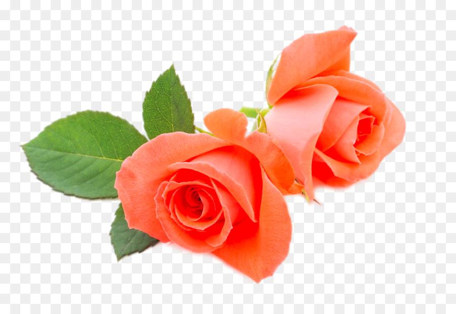 Descarga gratuita de Rosa Beach, Flor, Naranja Imágen de Png