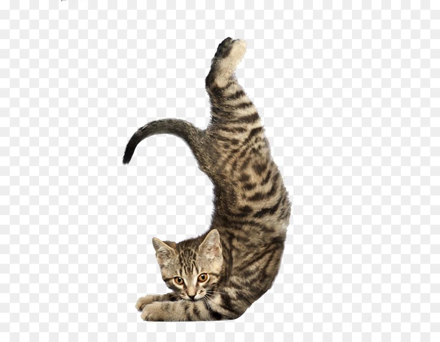 Descarga gratuita de Gato, Yoga A Los Gatos De La Purrfect De Entrenamiento, Yoga Perros Imágen de Png