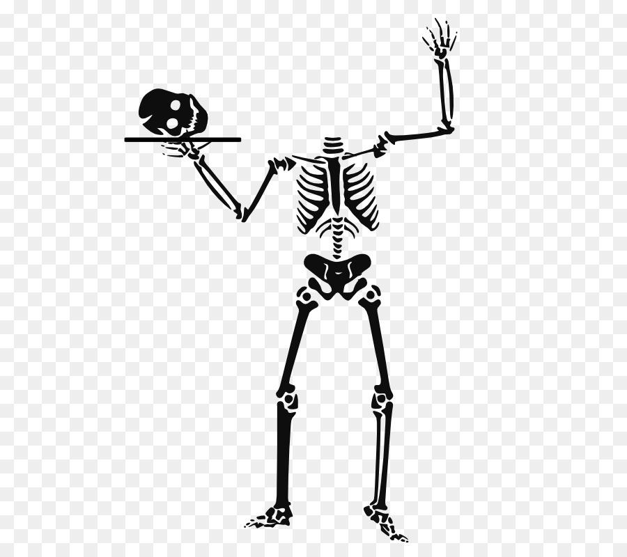 Descarga gratuita de Esqueleto Humano, Esqueleto, Stockxchng Imágen de Png