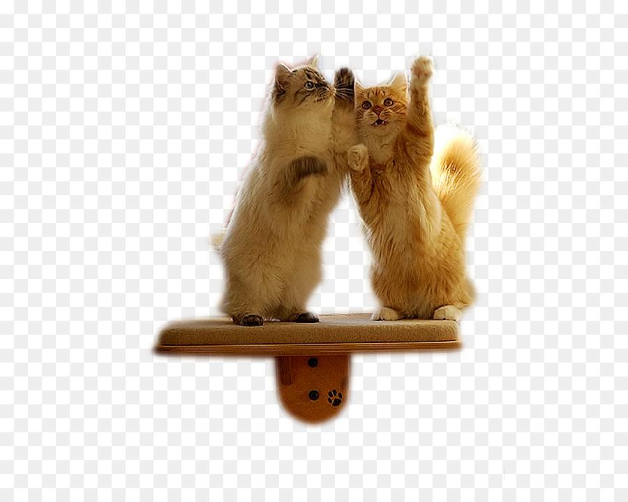 Descarga gratuita de Gato, Gatito, Mascota imágenes PNG