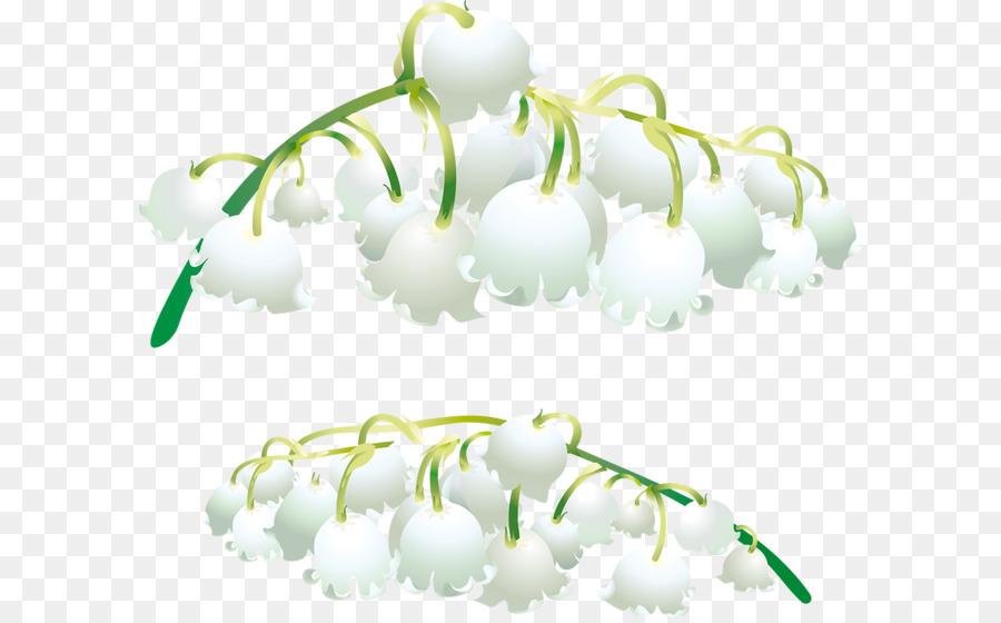 Descarga gratuita de Lirio De Los Valles, Las Orquídeas, Salep imágenes PNG