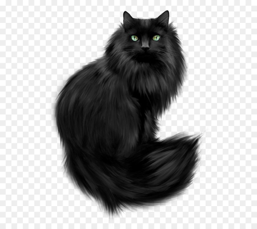 Descarga gratuita de Gato Del Bosque De Noruega, Gato Persa, Gatito imágenes PNG