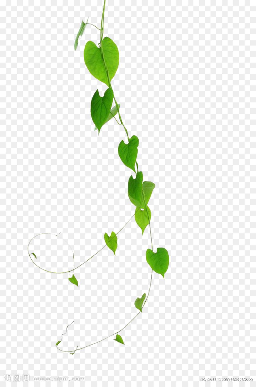 Descarga gratuita de Vid, Verde, Planta Imágen de Png