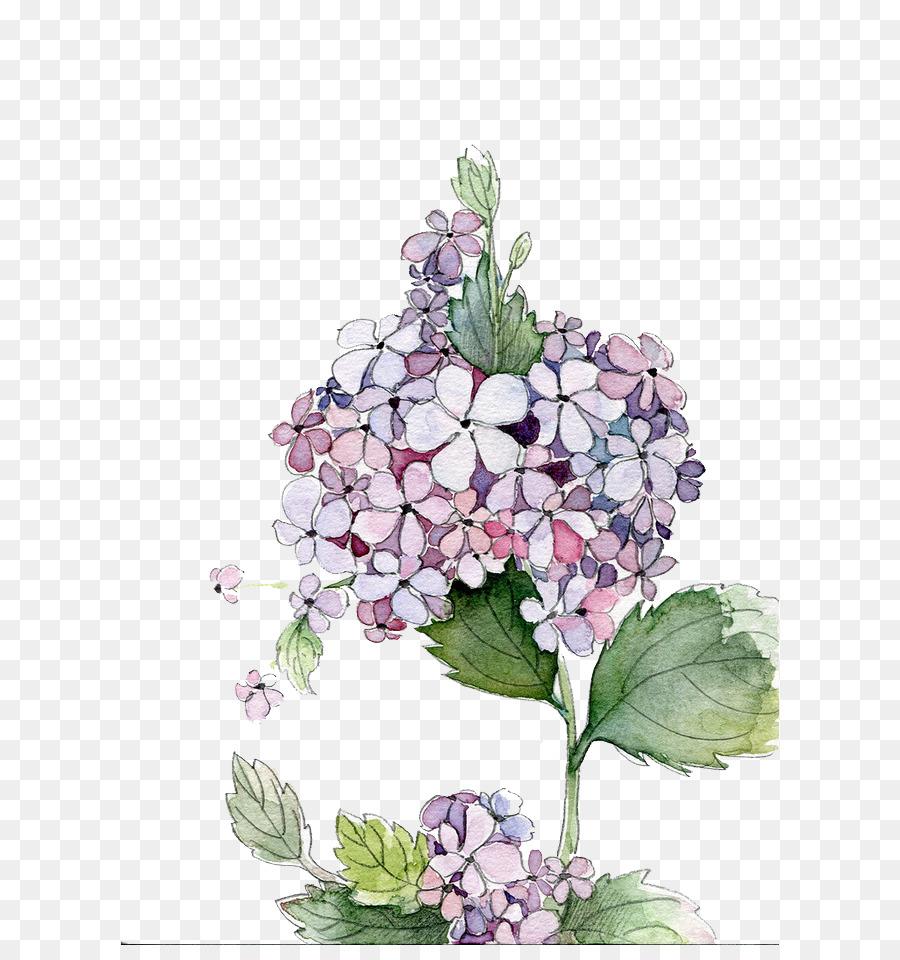 Descarga gratuita de Hortensia, Pintura A La Acuarela, Flor Imágen de Png
