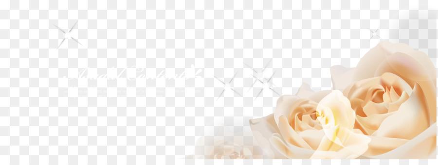 Descarga gratuita de Las Rosas De Jardín, Fondo De Escritorio, Rosa Imágen de Png