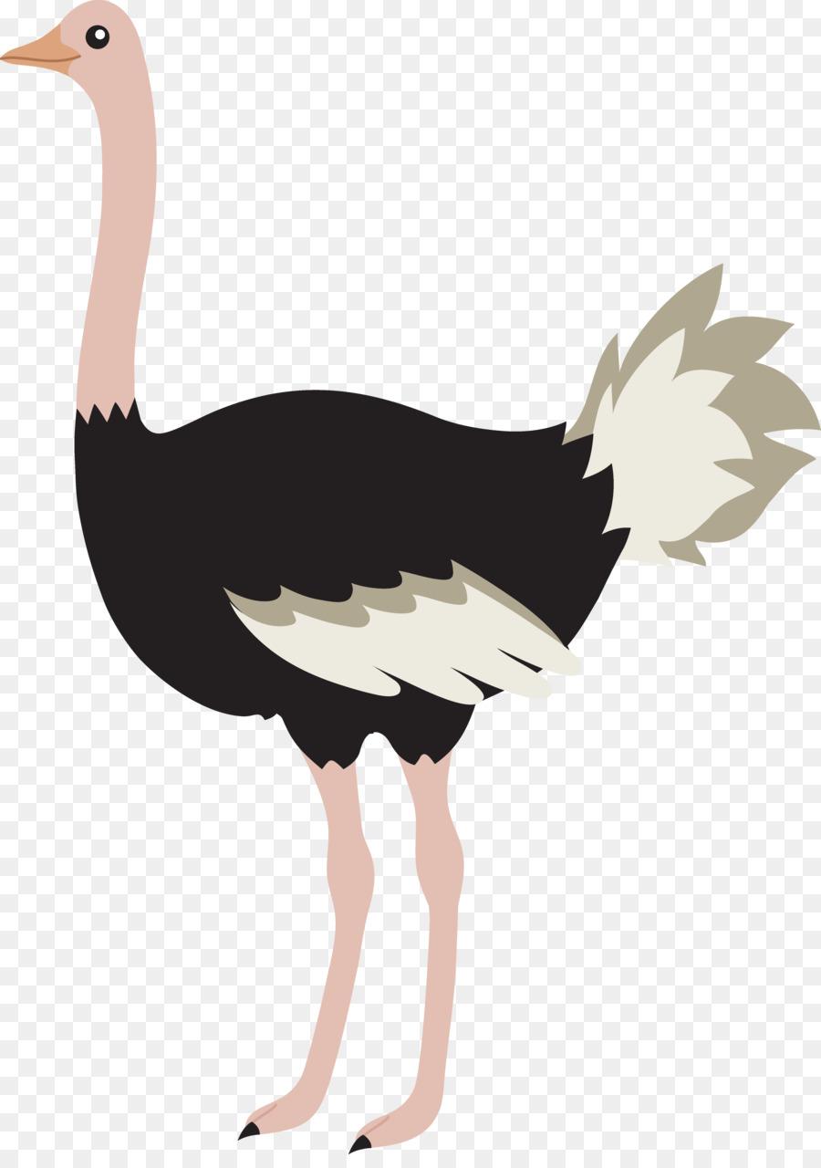 Descarga gratuita de Común De Avestruz, Pájaro, Camiseta imágenes PNG
