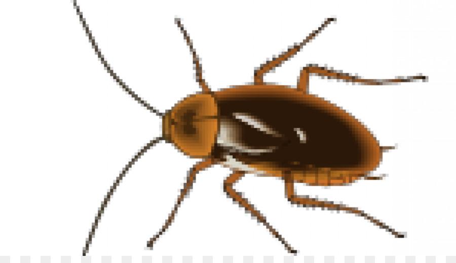 Descarga gratuita de Cucaracha, Control De Plagas, De Plagas imágenes PNG