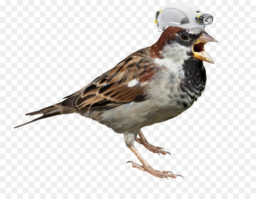 Descarga gratuita de Gorrión, Pájaro, Eurasia árbol De Gorrión imágenes PNG