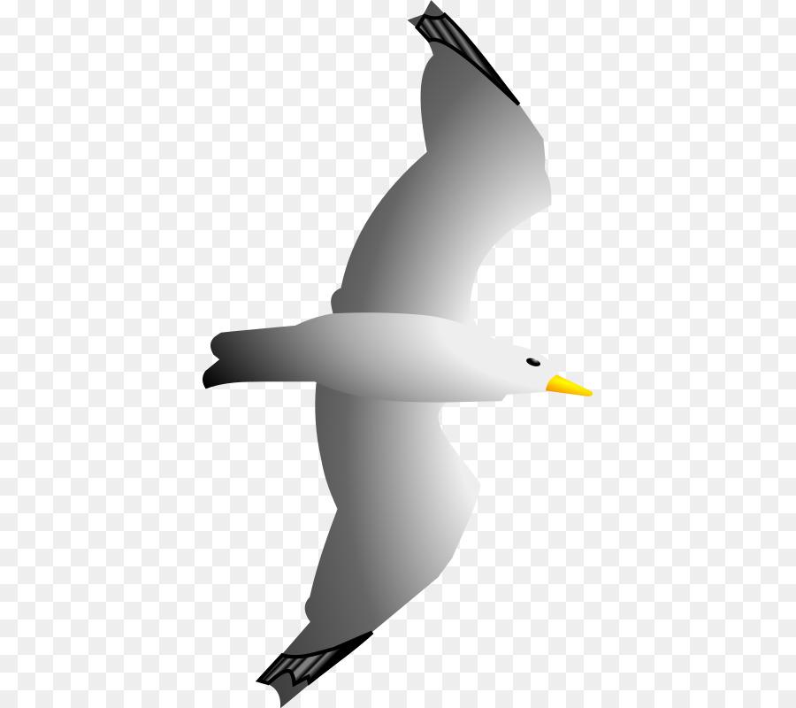 Descarga gratuita de Las Gaviotas, Pájaro, De Aves Marinas Imágen de Png