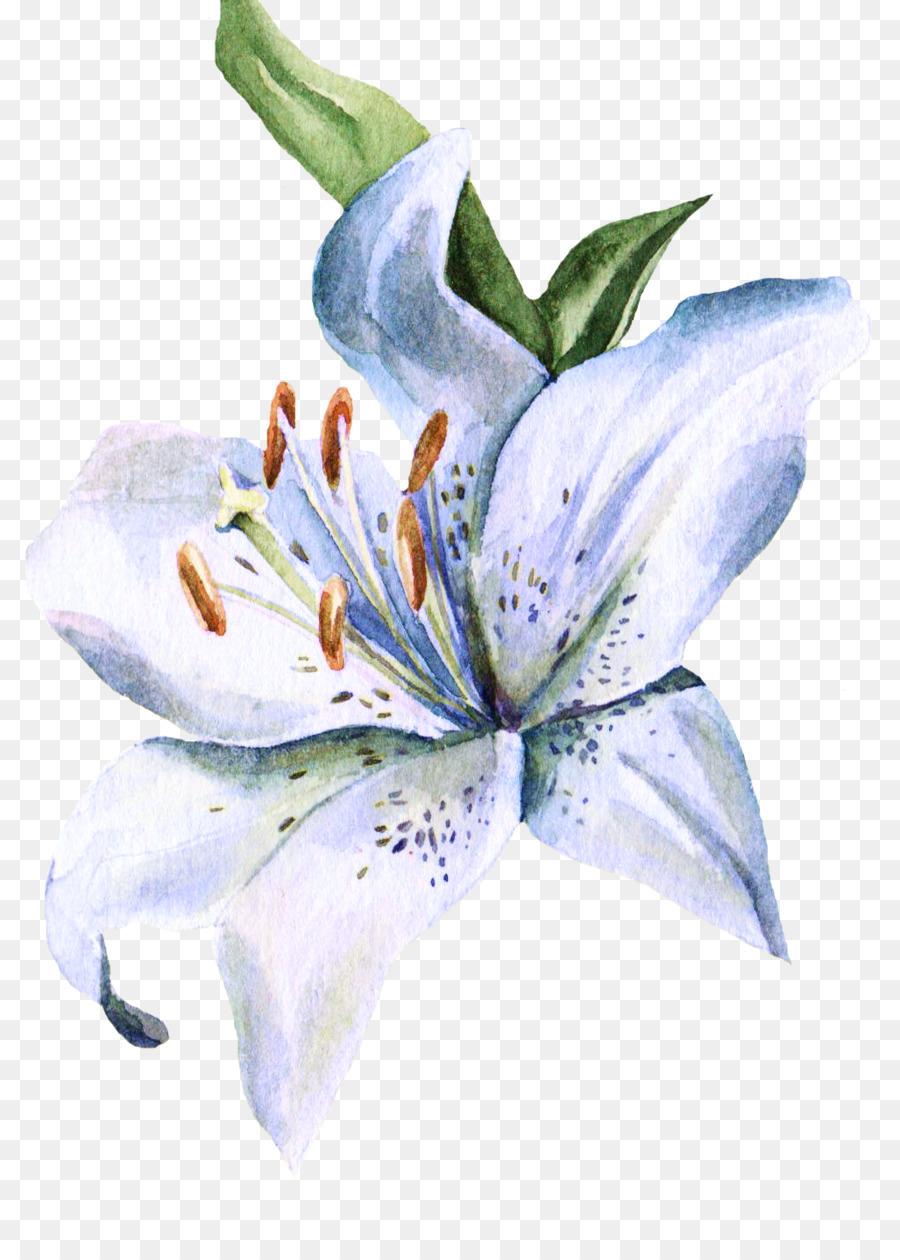 Descarga gratuita de Lilium, Pintura A La Acuarela, Acuarela De Flores imágenes PNG