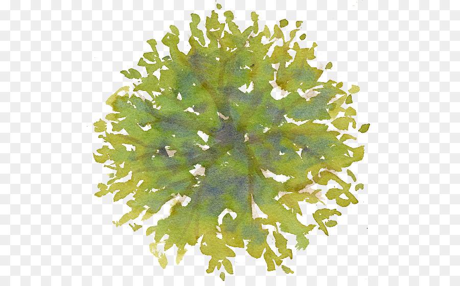 Descarga gratuita de árbol, Plan De, Plan De Sitio Imágen de Png