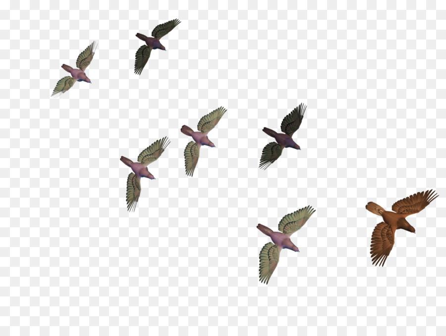 Descarga gratuita de Pájaro, Vuelo, Columbidae Imágen de Png