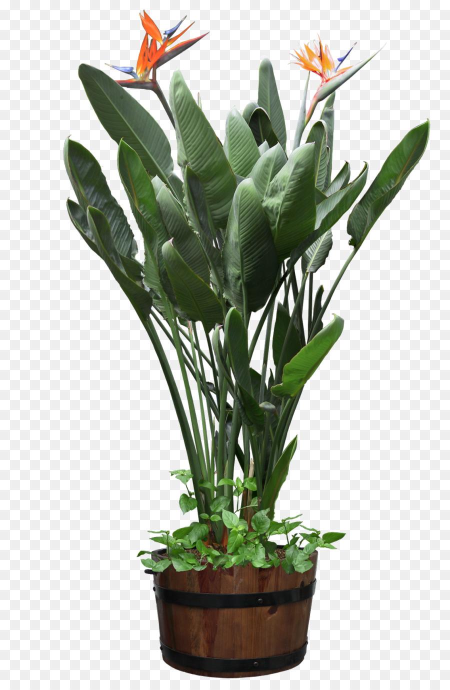Descarga gratuita de Planta, Planta De Interior, El Ave Del Paraíso De La Flor Imágen de Png