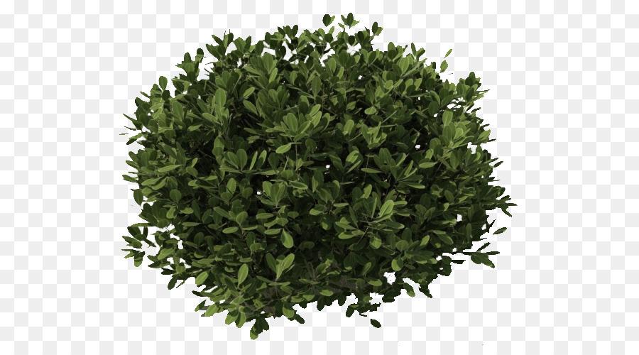 Arbusto, Planta, árbol Imagen Png