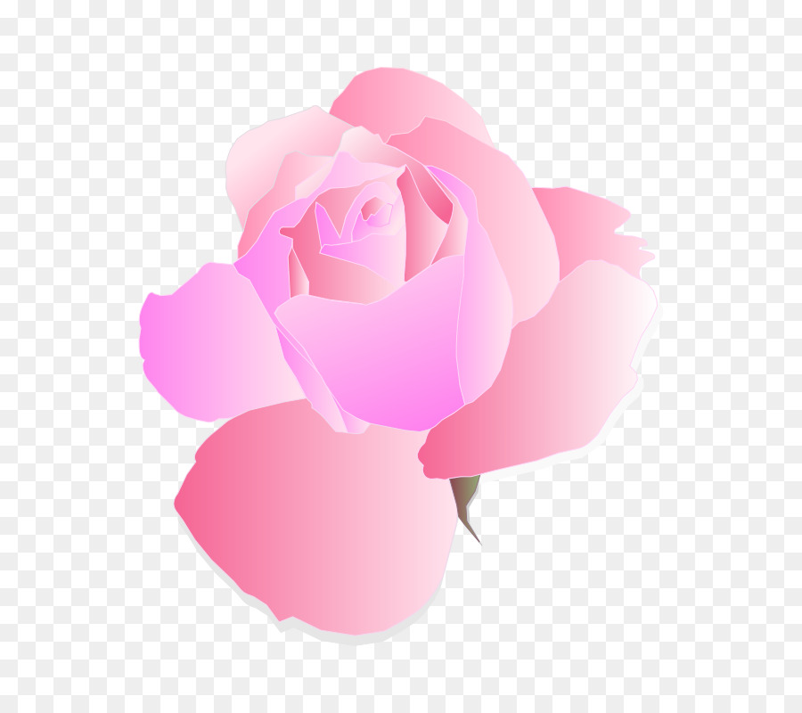 Descarga gratuita de Rosa, Flores De Color Rosa, Gratis Imágen de Png