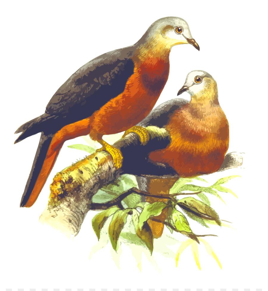 Descarga gratuita de Homing Pigeon, El Molinete De La Paloma, Columbidae Imágen de Png