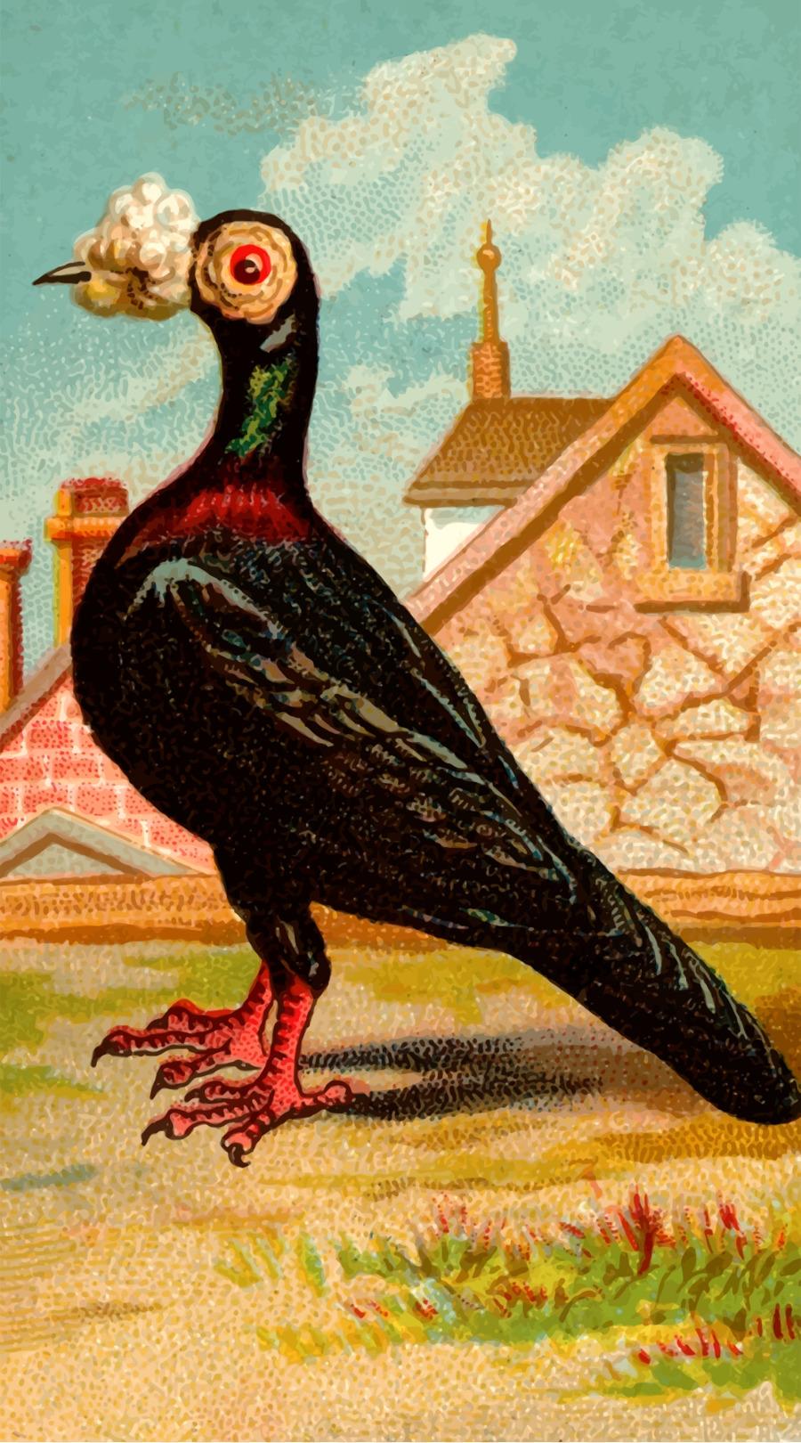 Descarga gratuita de Homing Pigeon, Carreras De Homero, El Molinete De La Paloma Imágen de Png