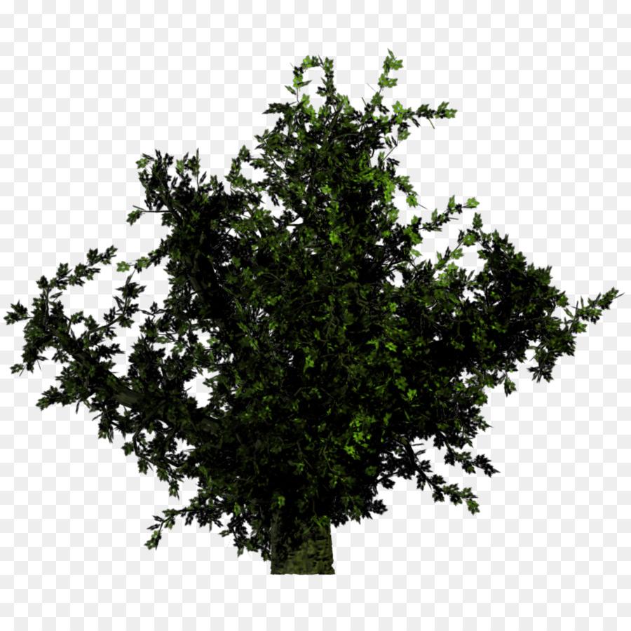 Descarga gratuita de árbol, Planta, Arbusto Imágen de Png