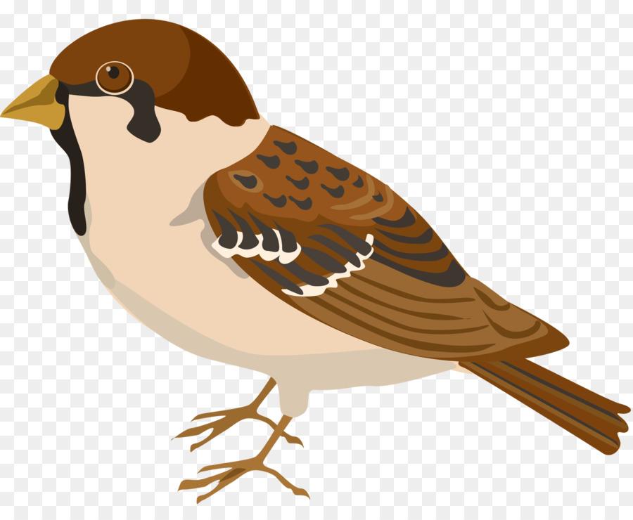 Descarga gratuita de Pájaro, Buffbellied Pipita, Gorrión Imágen de Png