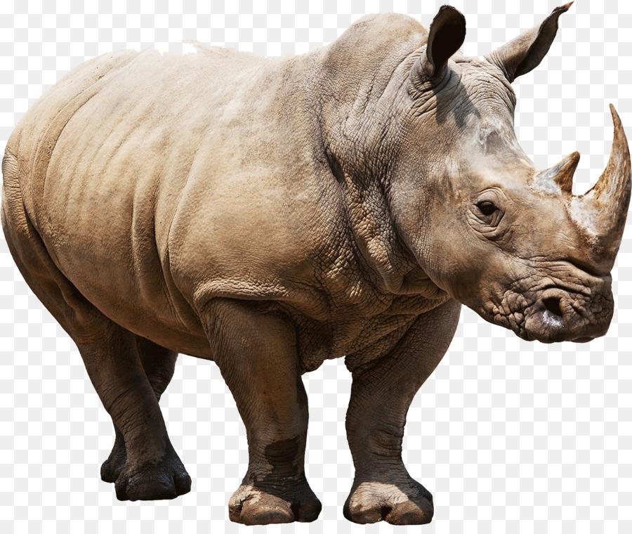 Descarga gratuita de Rhino, Postscript Encapsulado, Descargar imágenes PNG