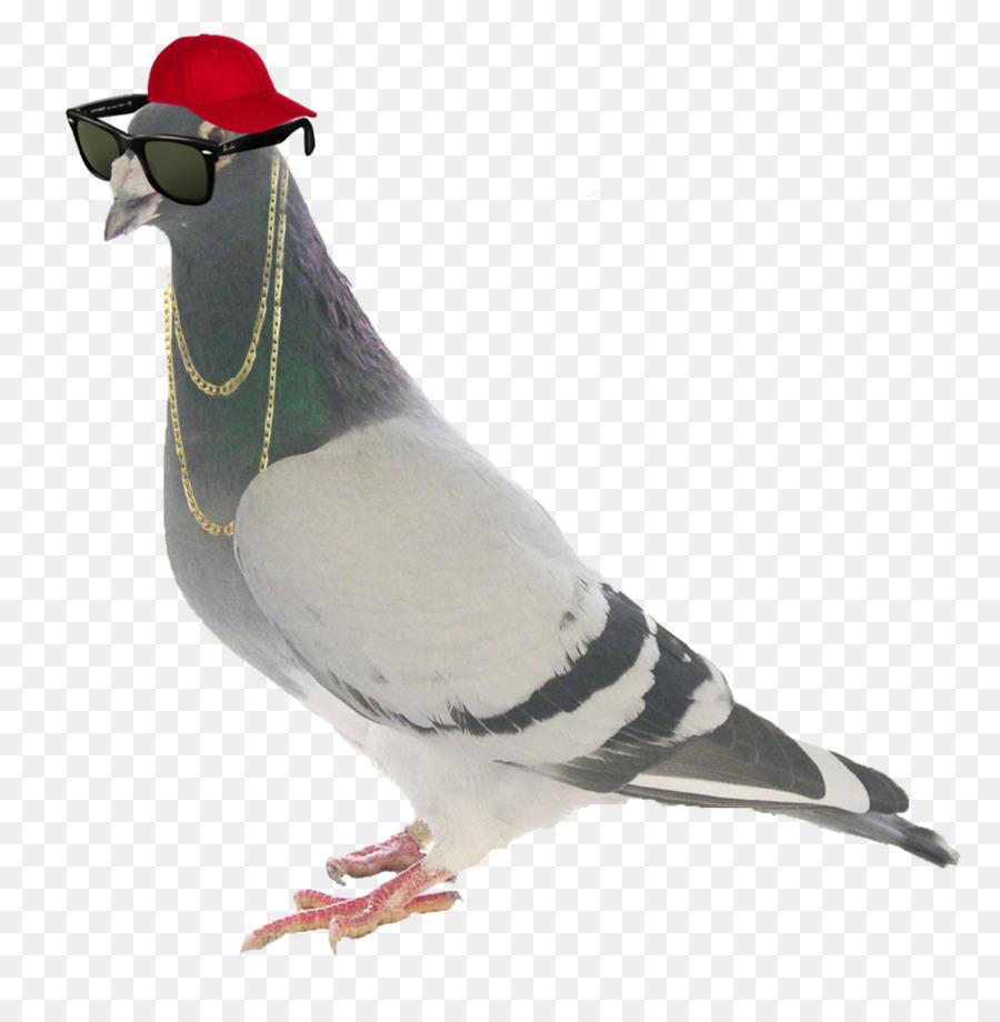 Descarga gratuita de Homing Pigeon, Carreras De Homero, Alemán Antiguo Búho De La Paloma Imágen de Png