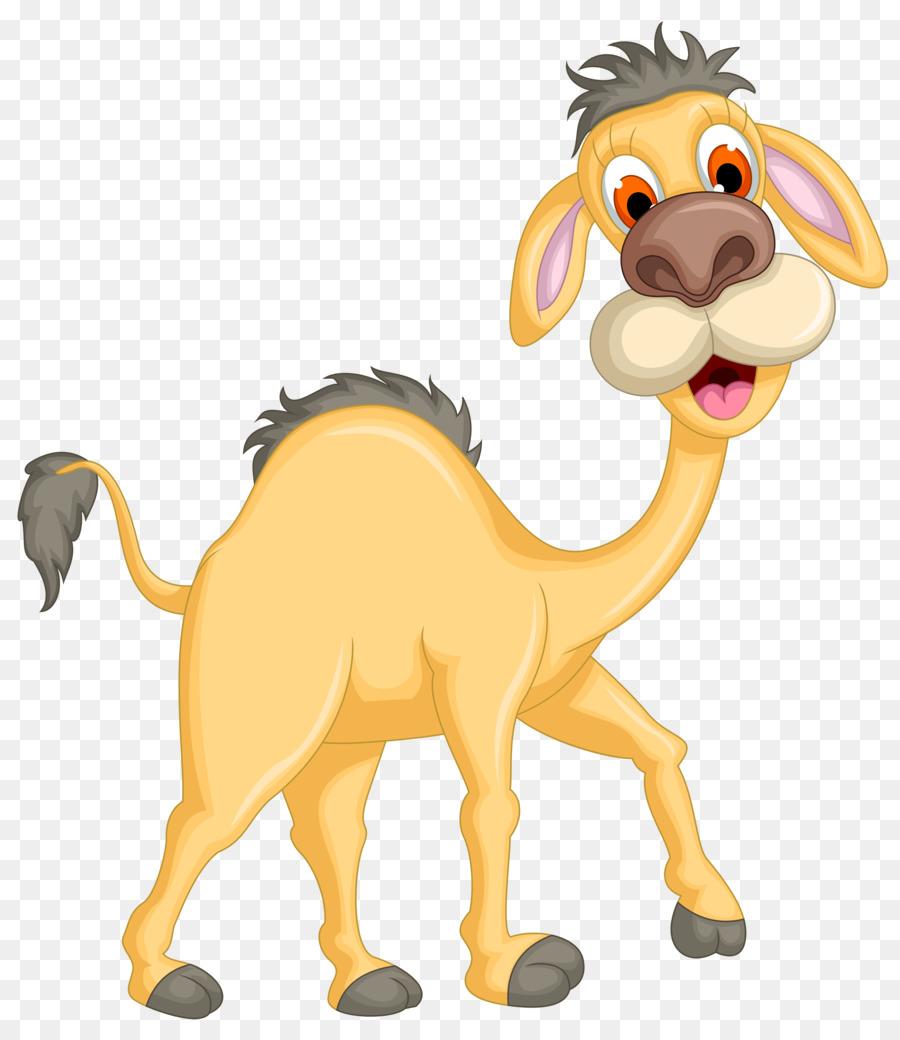 Descarga gratuita de Camello, Común De Avestruz, De Dibujos Animados imágenes PNG