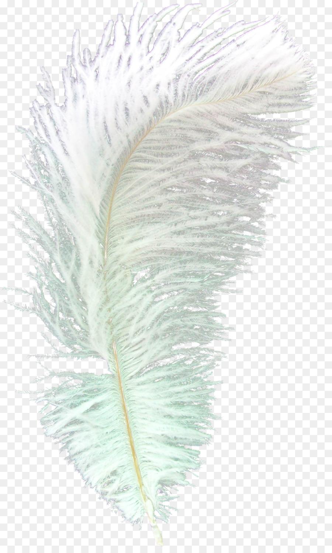 Descarga gratuita de Pluma, Asiática Del Pavo Real, Pájaro imágenes PNG