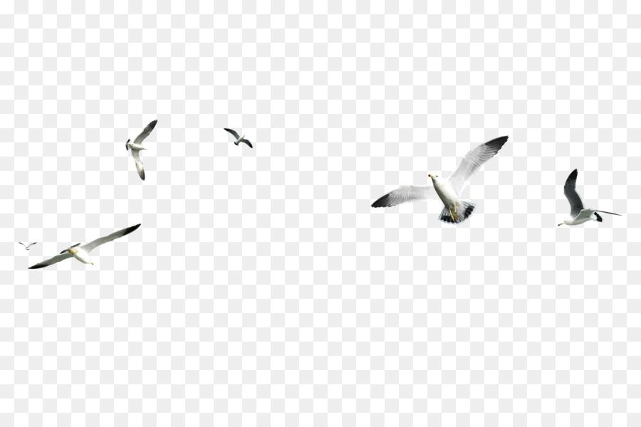 Descarga gratuita de Las Gaviotas, Pájaro, Postscript Encapsulado Imágen de Png