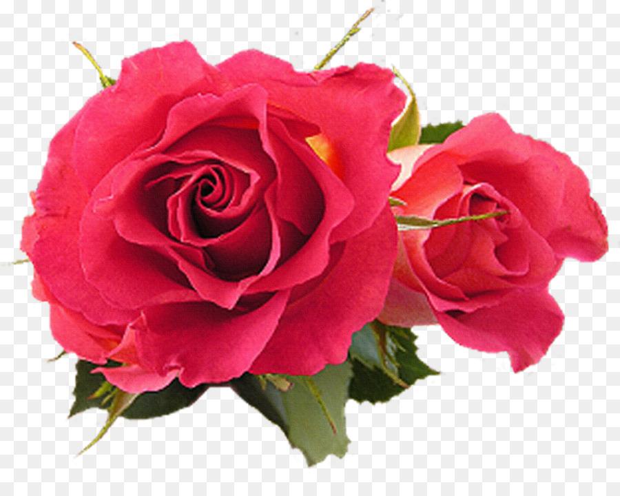 Descarga gratuita de Flor, Rosa, Fucsia Imágen de Png