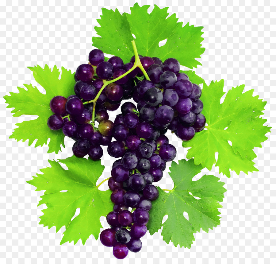Descarga gratuita de Pinot Noir, Uva, La Fruta Imágen de Png