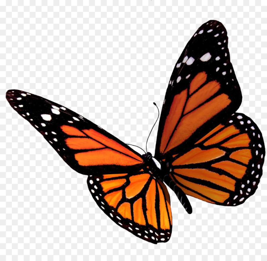 Descarga gratuita de Mariposa, Iconos De Equipo, Los Insectos imágenes PNG